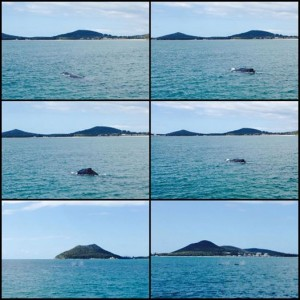 Whale Watching in Nelson Bay, Port Stepehens